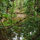 More Daintree by Watertoy