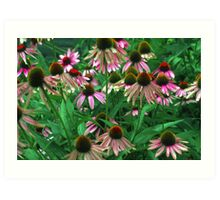 Cone Flowers II Art Print