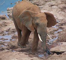 Teen Elephant by Raymond  Ah Sing