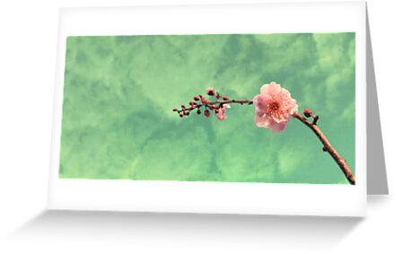 Spring Dreaming by Basia McAuley