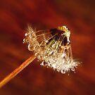 Dandelion diamonds by Basia McAuley