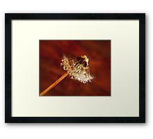Dandelion diamonds Framed Print