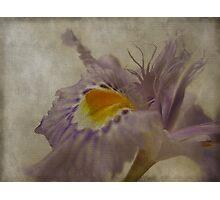 Floral Linen Photographic Print