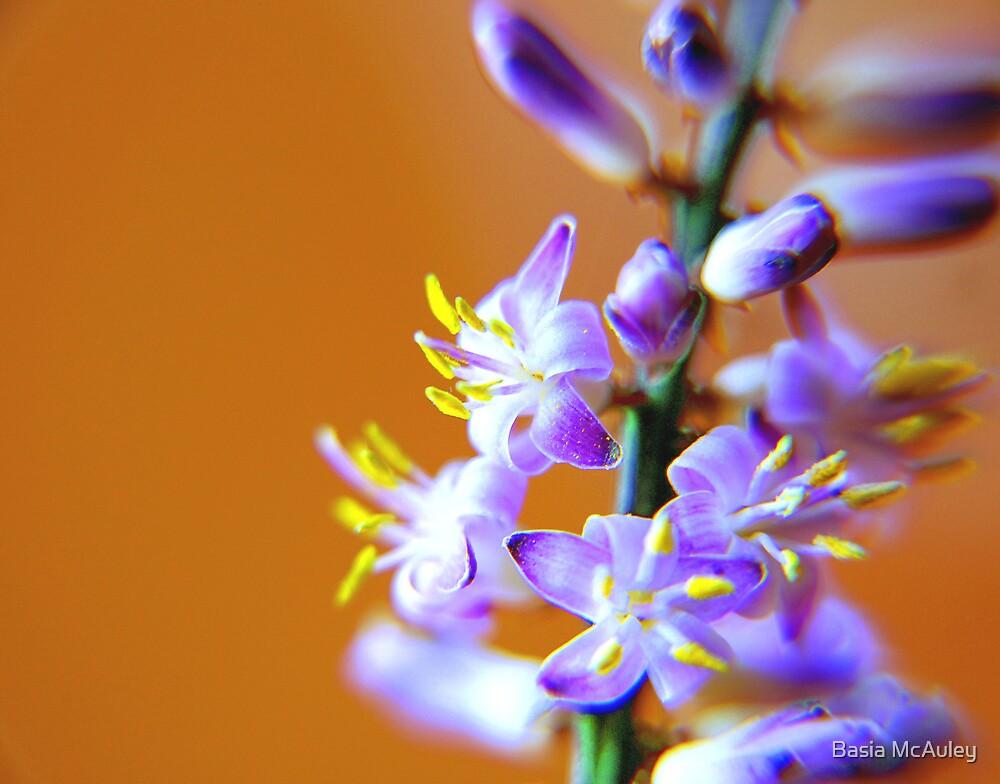 Tiny Beauty by Basia McAuley