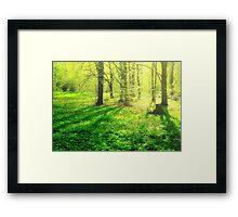 Forest Glow Framed Print