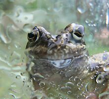 Frog on glass  by David Bass