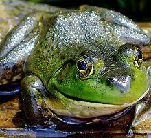 Bullfrog  by main1