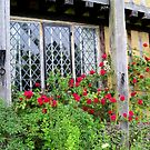 Red Roses Around an Old Leaded Window  by hootonles