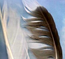 Flying Seagull by Liz Wear