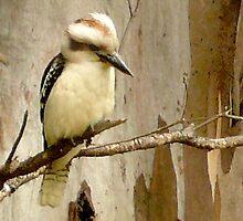 Kookaburra on a Gum tree by Roz McQuillan