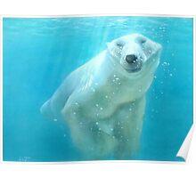 polar bear acrylic Poster