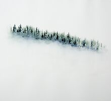 Snowfall Evergree Forest by David Hayward