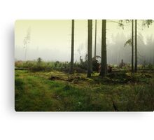 Fog in the forest in Sunrise (My forest) Canvas Print