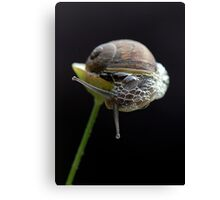 Forever Blowing Bubbles Canvas Print