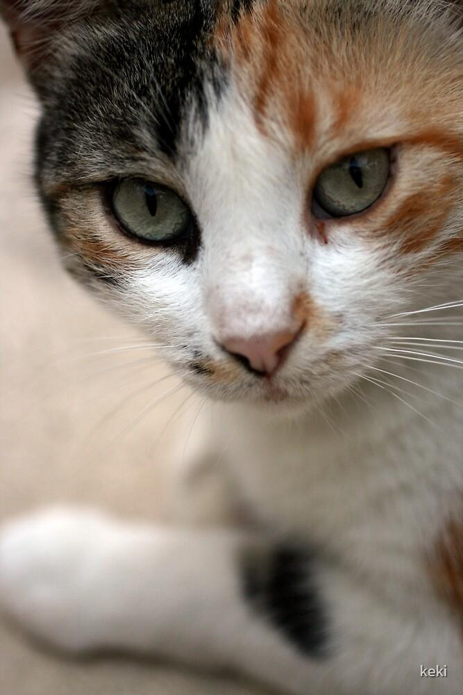 Cat by keki