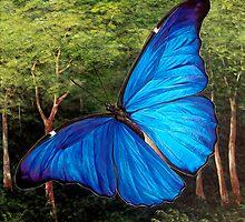 Blue Morpho Butterfly by Paul Schulz