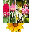 Spring by Daniel Rayfield