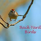 Back Yard Birds  by Lisa Jones Caldwell