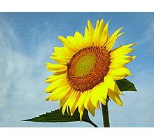 Sunny Side Up! Photographic Print