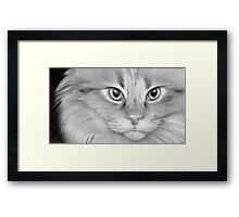 Jinny - female cat Framed Print