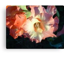 Sword lily  7 Canvas Print