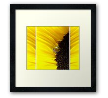 Sunflower Tryptichon Framed Print