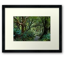 primeval forest on kepler track Framed Print