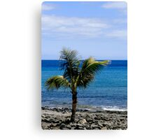 Palm tree on beach Canvas Print