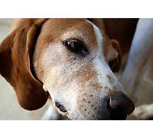 Stray Dog Photographic Print