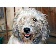 scruff the dog Photographic Print