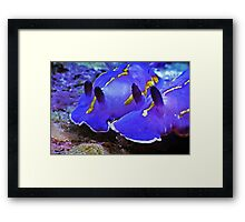 Fascinating Marine Life: Water Snails Framed Print