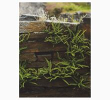 Spleenwort Maidenhair fern on wall at Cashelnagor Kids Clothes