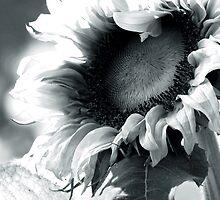 It's Always Sunny by Jill Sprague