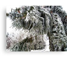 frozen needles Canvas Print