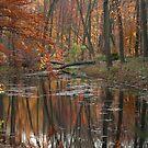Nature by ZeeZeeshots