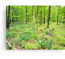 Iris In a Spring Forest Canvas Print
