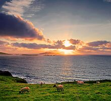 Dingle Peninsula, Co.Kerry, Ireland by Michael Walsh