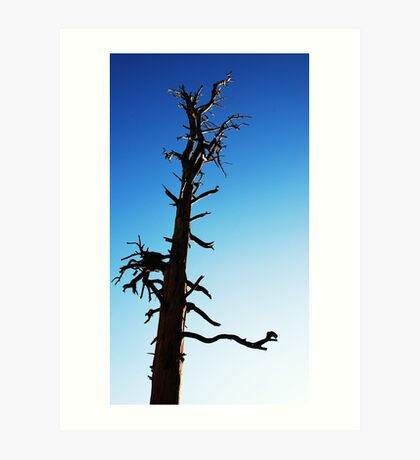 LONEY TREE Art Print