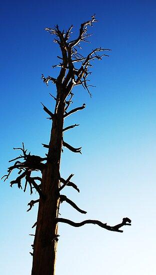 LONEY TREE by Jenson Yazzie