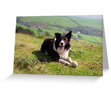 Indy: 19th March 1998 to 19th December 2011  Greeting Card