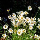 A Patch of Wild Daisies by David DeWitt