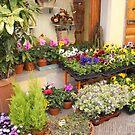 The Plant Shop by Fara