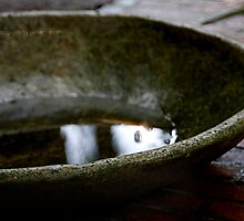 rain catcher by jamie marcelo