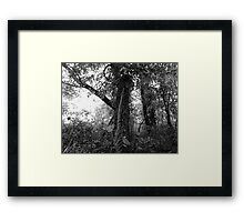 woods3 Framed Print