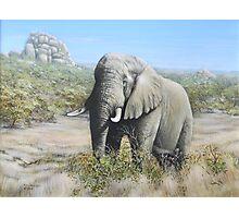 Pilansberg Elephant  Photographic Print
