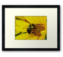 Bee Black and Bloom Framed Print