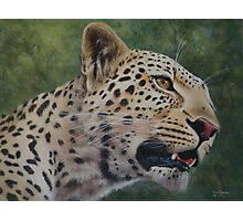 Phil's Leopard - acrylic Photographic Print