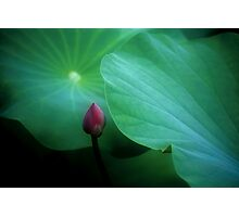 Lotus #91 Photographic Print