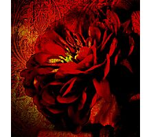 Scarlet Ribbon Photographic Print