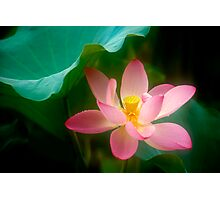 Lotus #47 Photographic Print